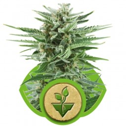 growmart-easy-bud
