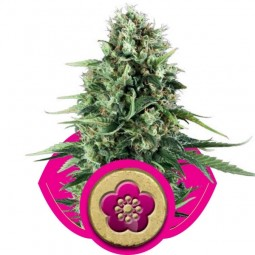 growmart-power-flower