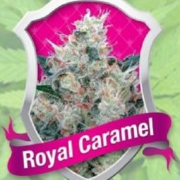 growmart-royal-caramel