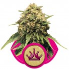 growmart-special-queen