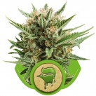 growmart-sweet-skunk-automatic