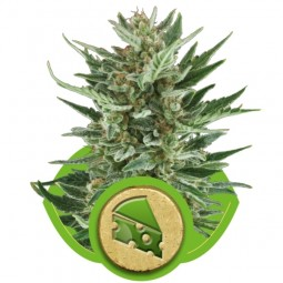 growmart-royal-cheese-automatic