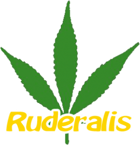 Co je Cannabis Ruderalis ?