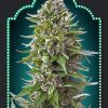 Auto Northern Lights seminka