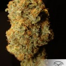 Desfran-dutch-passion-growmart-growshop