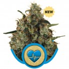 medical-mass-growmart-semena