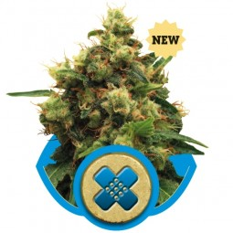 painkiller-xl-growmart