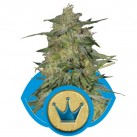 growmart-royal-highness