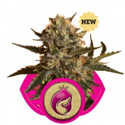 royal-madre-growmart