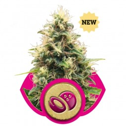 growmart-somango-xl