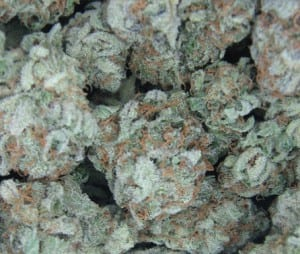 white-widow-