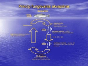 princip-aquaphonie-growmart