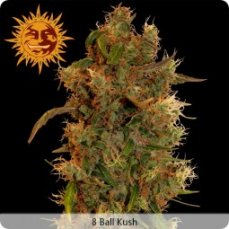 growmart-8-ball-kush