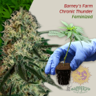 Barney´s-Farm-Chronic-Thunder-growshop-growmart