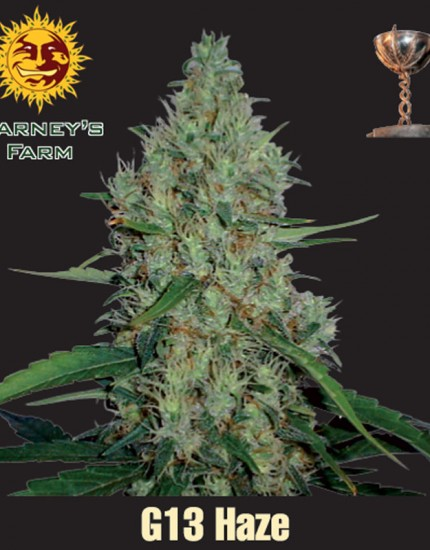 Barneys-Feminized-G13-Haze-growshop-growmart