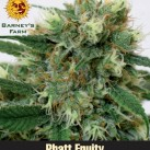 Barneys-Feminized-Phatt-Fruity-growmart