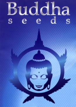 Buddha-seeds-growmart