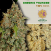 Chronic-Thunder-Barney´s-Farm-growshop-growmart