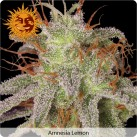 growmart-amnesia-lemon