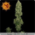 barneys-farm-nyc-diesel-autoflower-growshop-growmart