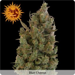 growmart-blue-cheese