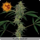 growmart-blue-mammoth-auto