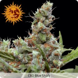 growmart-cbd-blue-shark