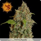 chronic-thunder-growshop-growmart
