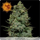 growmart-cookies-kush