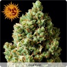 growmart-critical-kush