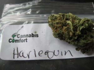 high-CBD-cannabis-Harlequin-growshop-growmart