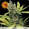 growmart-honey-b