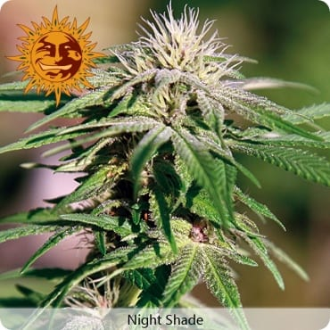 night-shade-growshop-growmart