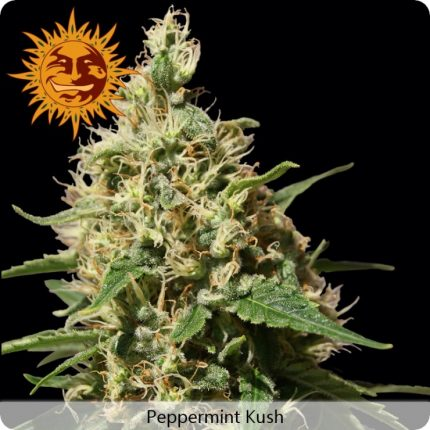 growmart-peppermint-kush