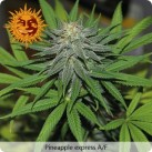 growmart-pineapple-express-auto