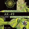 ak-49-autoflower-description