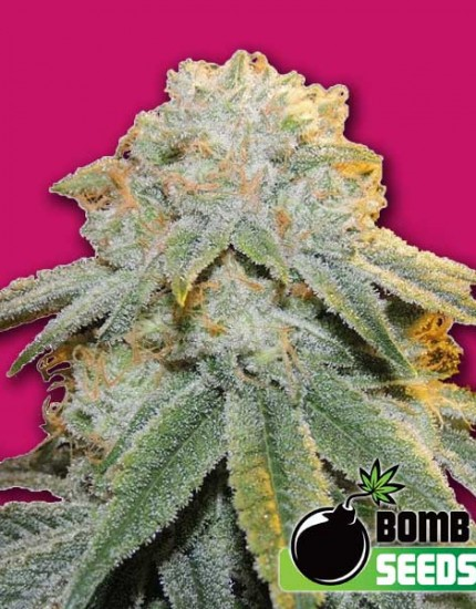 growmart-bubble-bomb