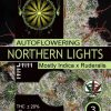 northern-lights-auto-vision-seeds-descriptions
