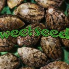 sweet-seeds-growmart