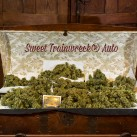 sweet-trainwreck-autoflower-growshop-growmart