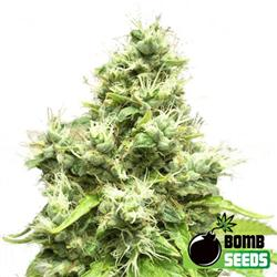 bomb-seeds-female-medi-bomb-no-1-semena-konopi-growmart