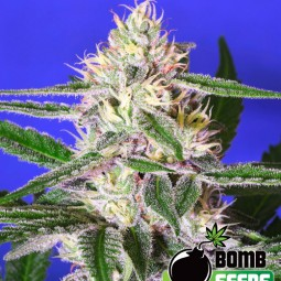 growmart-cheese-bomb