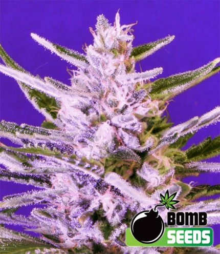 growmart-ice-bomb
