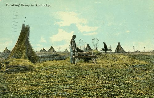 kentucky_hemp_farming