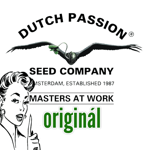 Dutch Passion konopná semena