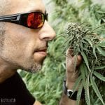 Franco Loja Green house seeds strain hunters